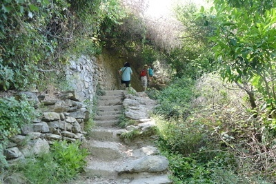 following the cinque terre trail up some rocky steps surrounded by vegetation