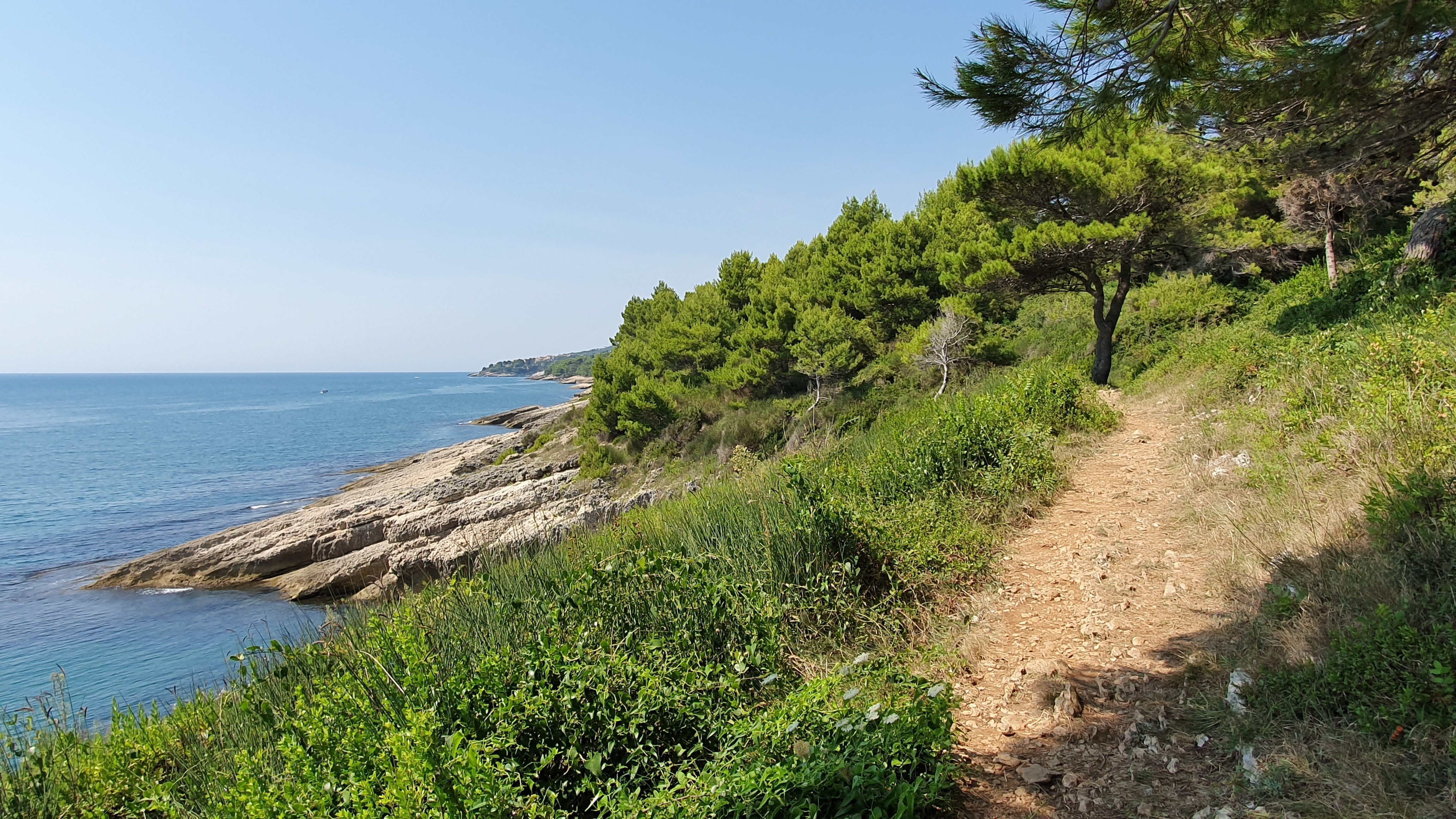 a coastal path through trees overlooking the rocky coastline and sea